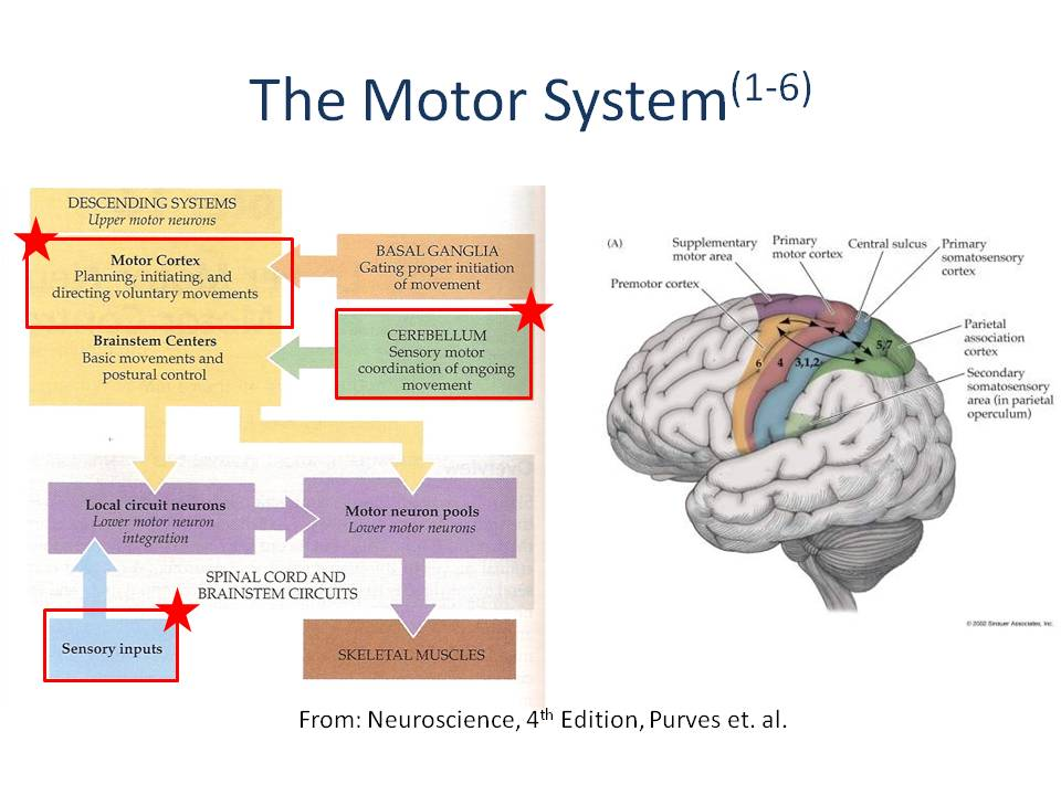 Background And Learning Motor Control Series Ptbraintrust