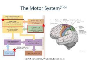 The Motor System(1-6)
