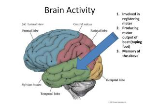 Brain Activity Sound 1 PTBrainTrust