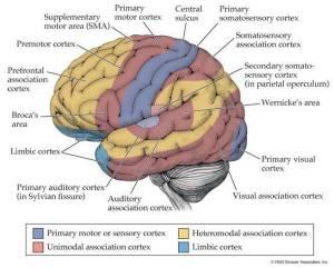 Brain Activity Sound 2 PTBrainTrust