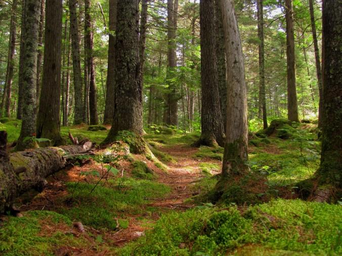 http://contributors.pressherald.com/wp-content/uploads/2015/01/forest.jpg