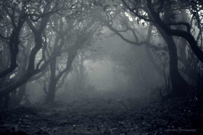 spooky-forrest